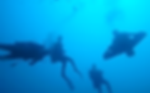 Les tarifs du club de plongee Barrauda Club Dakar