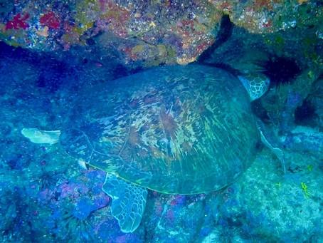 Des tortues au Sénégal !