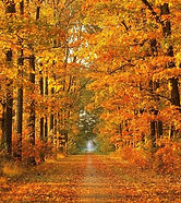 492e407f93fde2b31d5cffb77c8c9ea5--autumn