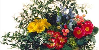 Terrine de plantes de printemps