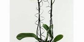 Orchidée blanche décorée avec cache-pot
