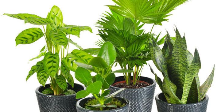 Surprise de plantes vertes