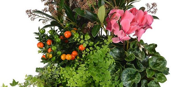 Terrine de plantes extérieure automne-hiver