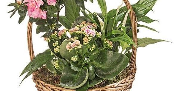 Panier de plantes intérieure tradition