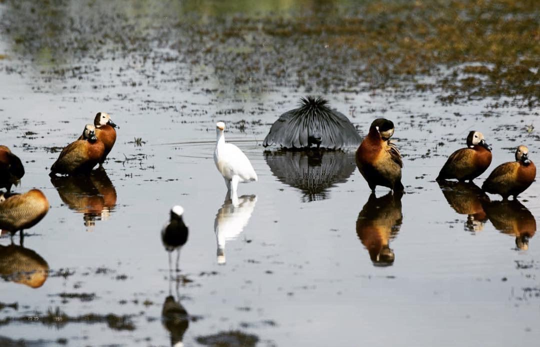 A birders paradise