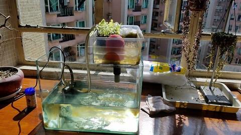 Aquaponics-2b.jpg