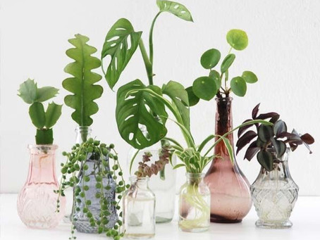 Easy to Care For House Plants