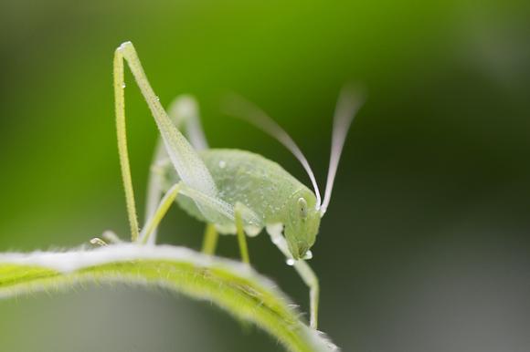 Grasshopper Image No. 006