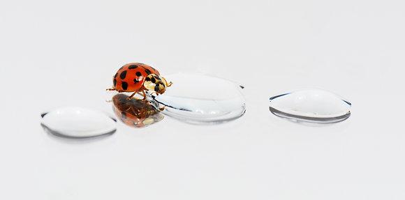Harlequin Ladybird Image No. 110