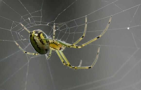 Spider Image No. 009
