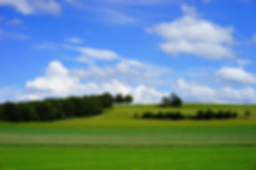 fields-1464770.jpg