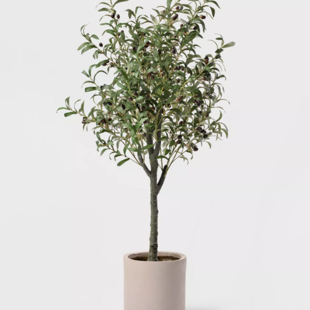 Potted Olive Tree from Target