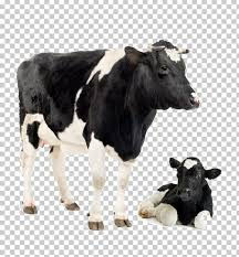 holstein cow calf.jpeg