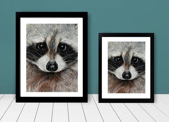 Framed Print - Close Up Raccoon