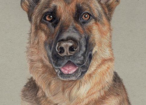 Shepherd - Original Art