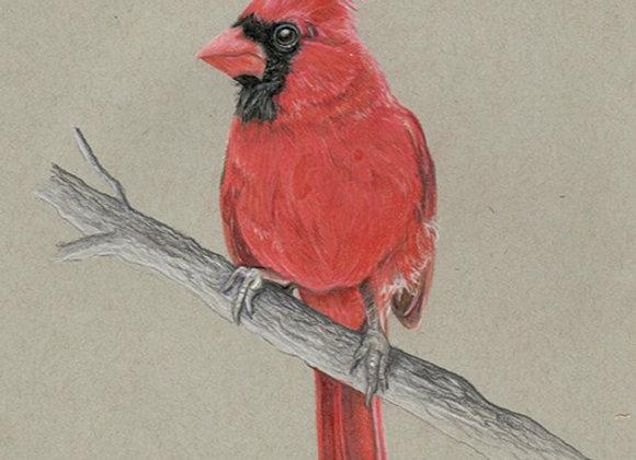 Cardinal - Original Art