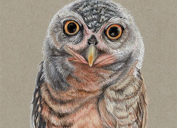 Owl - Original Art