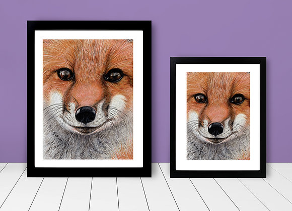 Framed Print - Close Up Fox