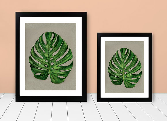 Framed Print - Monstera Leaf