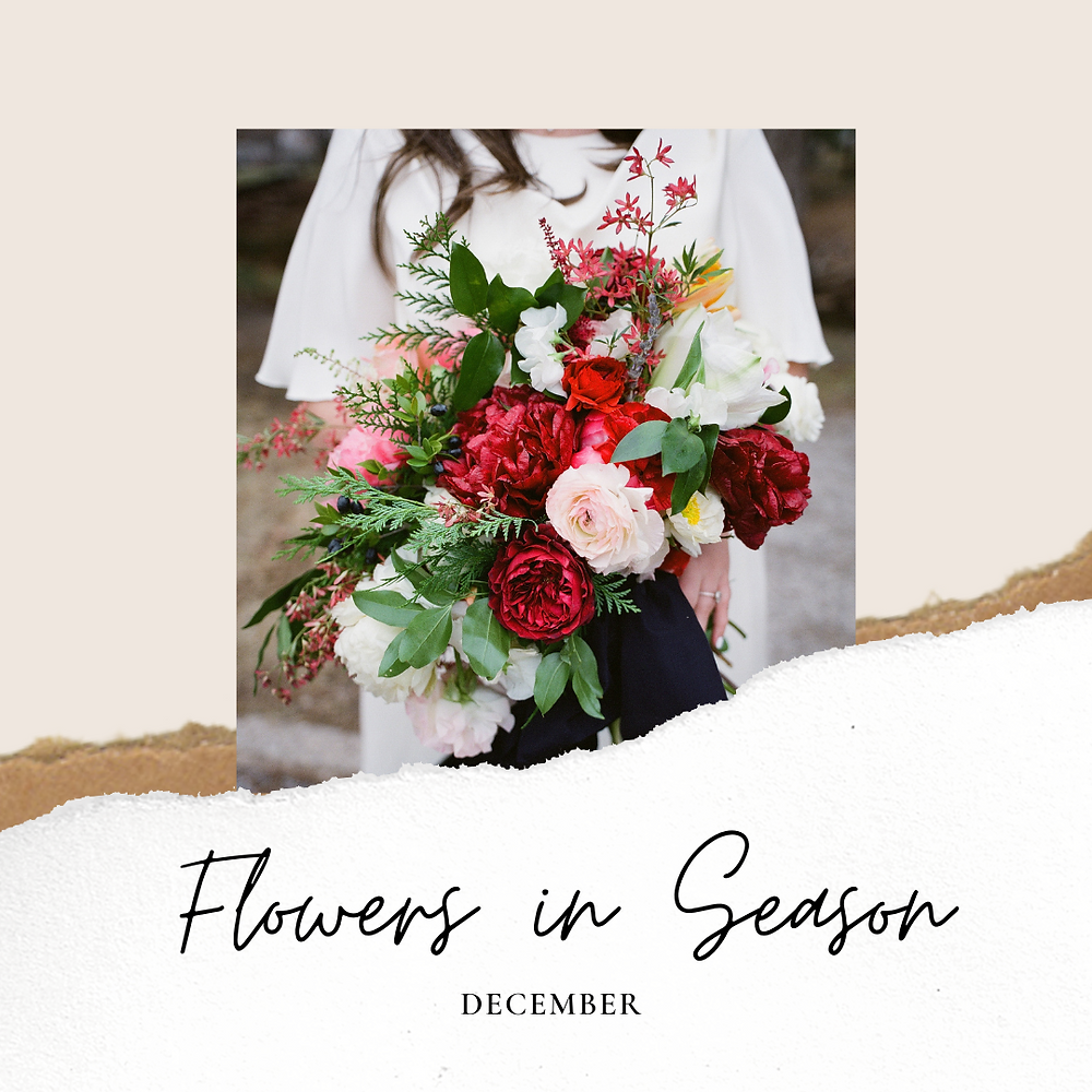 flowers in season, december, december wedding, wedding flowers, winter wedding, winter flowers, interesting varieties for winter, december bouquet, what flowers for december