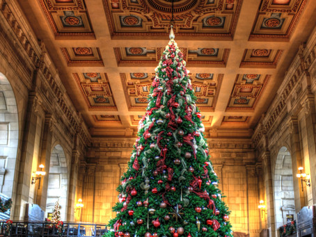 Discover the Best Christmas Tree Displays