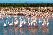 flamingos odiel_edited.jpg