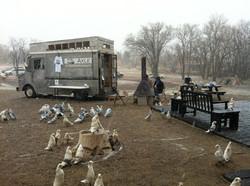 Landings: Birds in the Park, Hengst