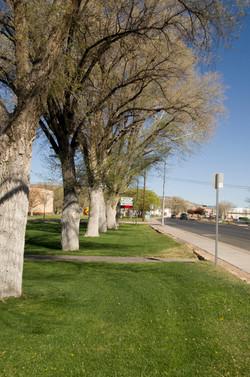 city hall park trees at street