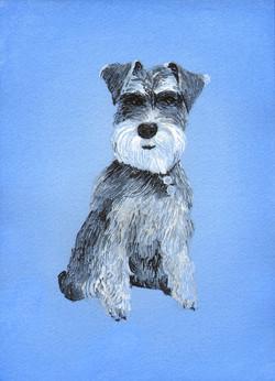 Lisa de St. Croix Dog