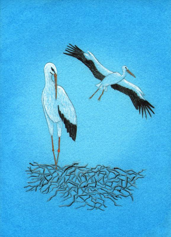 Lisa de St. Croix Stork