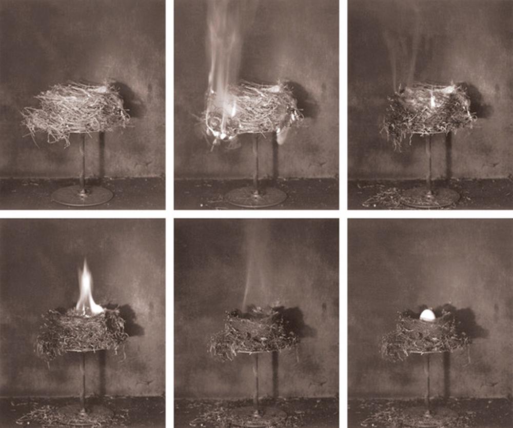 Zoe Zimmerman phoenix nest II.jpeg