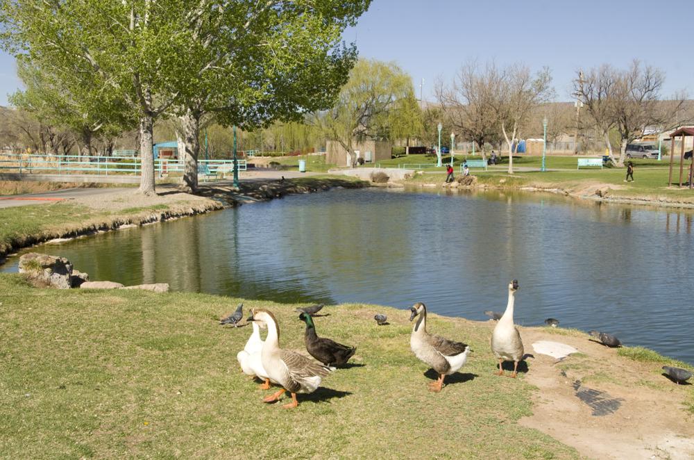 pond 2, Riverwalk park.jpg