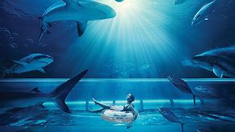 2020 Atlantis Shark Slide.jpg