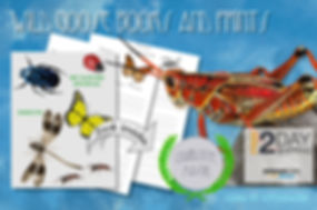 03 - Nature Journal Promo - Insects.jpg