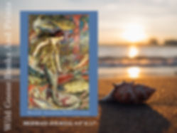 shell-beach-promo.jpg