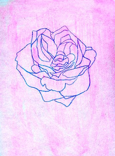 Blue rose 2.jpg