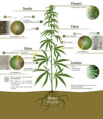 hemp chart 2.jpg