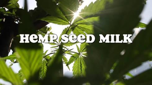Hemp Seed Milk