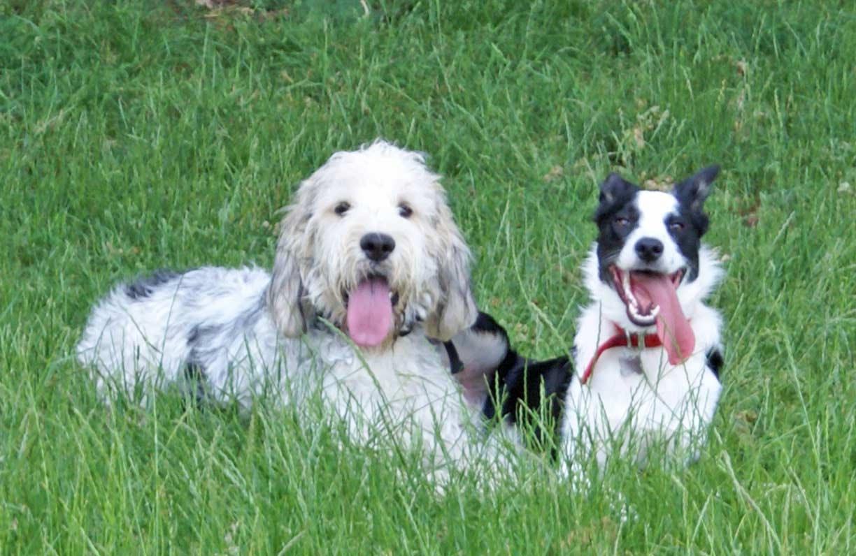 Bertie-in-Park-with-Len-min