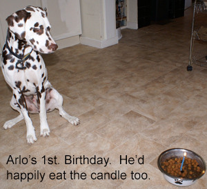 Dog Sitting Birthday Party for Arlo