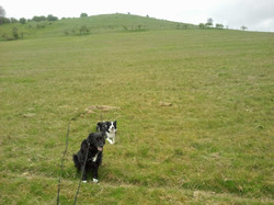 Lucy and Max Posing at Pegsdon 17 April