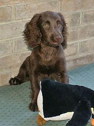 Max-Doggie-day-care.jpg