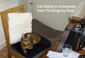 House and Cat Sitting in Colchester