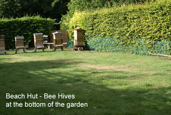 Bees at the Bottom of the Garden - House Sitting in the Chilterns