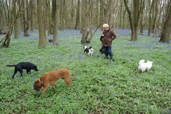 Alby-Molly-Ruby-and-Yaz-in-the-Bluebell-