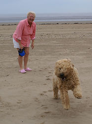 Paddy-Somerset-dog-sitters.jpg