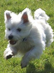 Lulu-Dog-Sitting.jpg