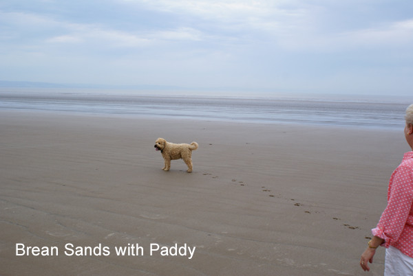 Walking Paddy on the Beach - Dog Sitting in Somerset