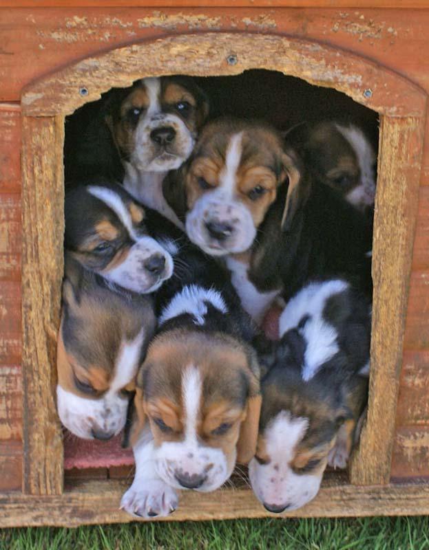 Puppies-01-min1