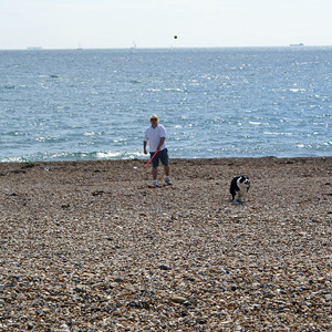 Day at the Beach While House Sitting and Dog Sitting in Fareham